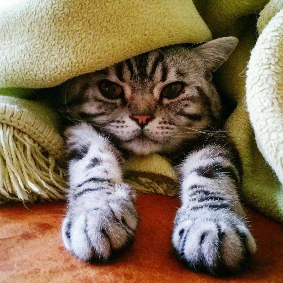 Close-Up Portrait Of Cat Wrapped In Blanket Relaxing On Floor