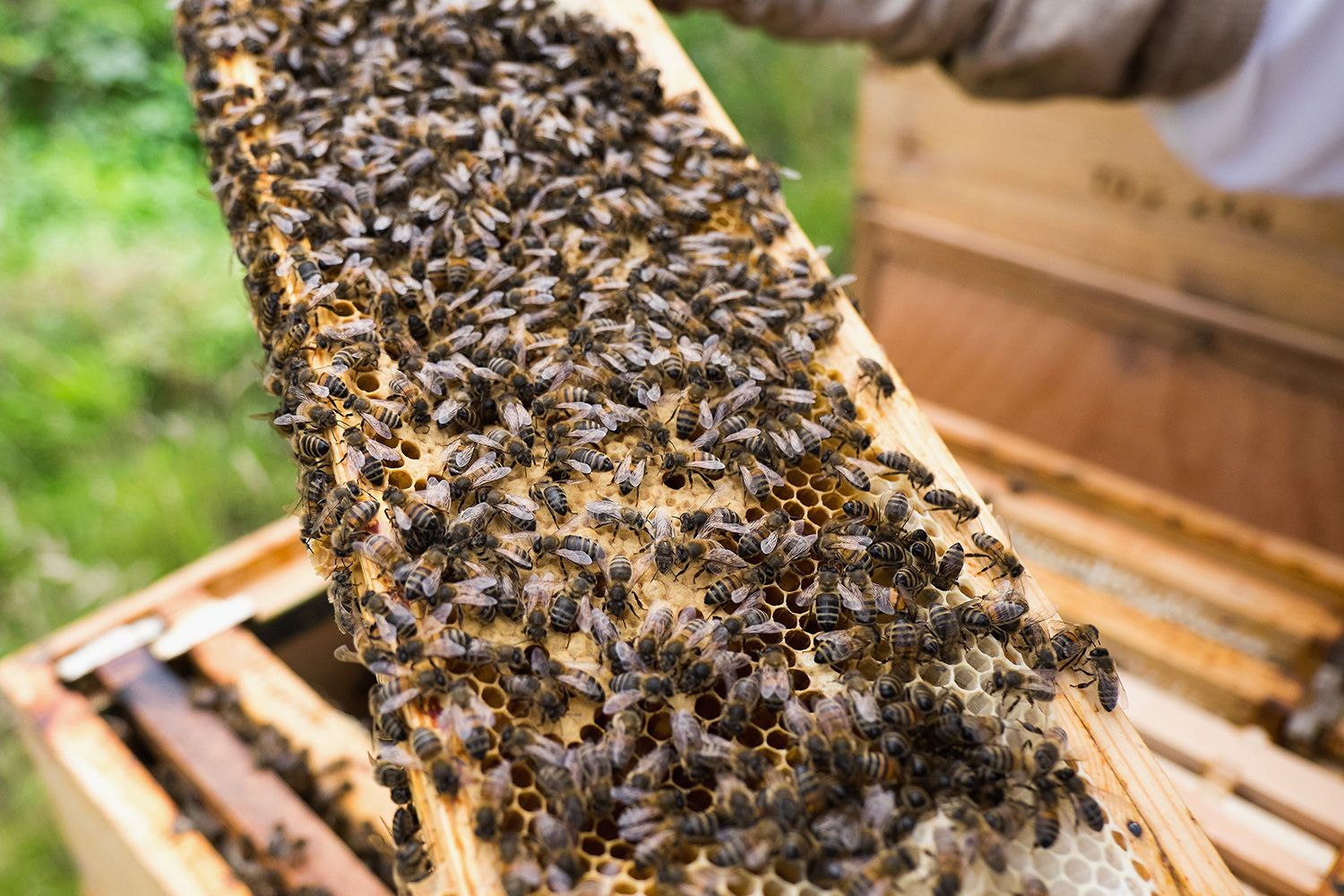 How to requeen a honey bee hive can you really buy the best beekeeping supplies without leaving home biocorpaavc