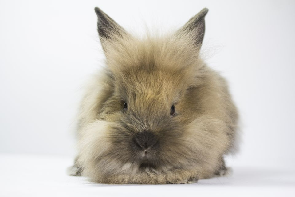 Small rabbit on white background