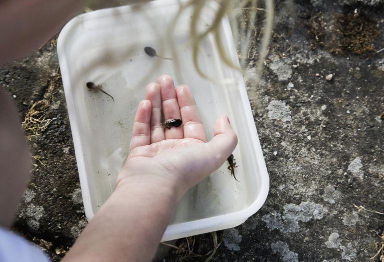 Girl holding tadpole