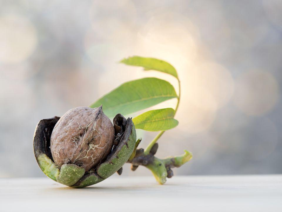 walnut hulls