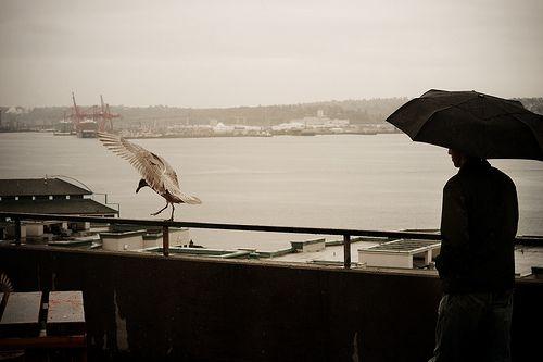 Umbrellas in Seattle