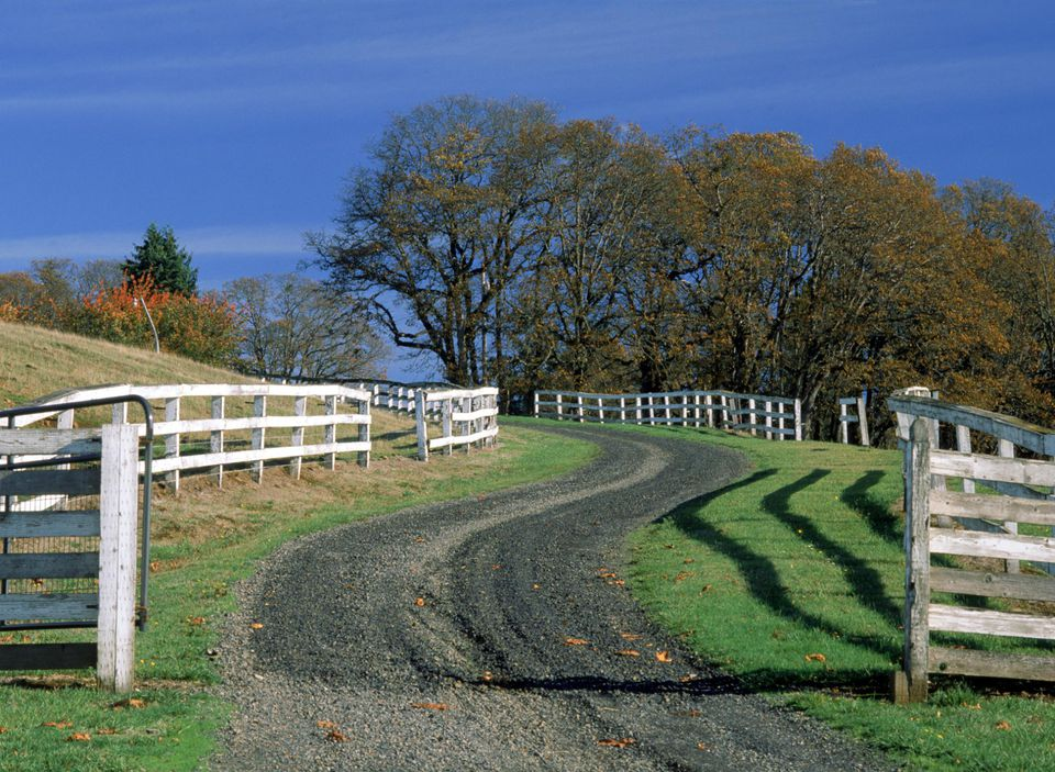 Gravel road lined by fences