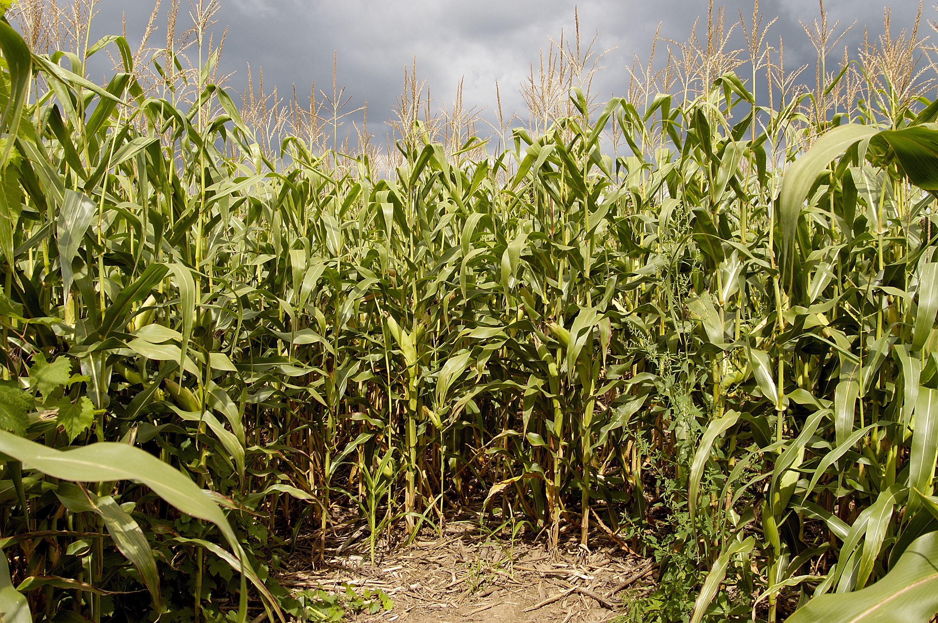 Corn Mazes And Pumpkin Patches In Raleigh Durham