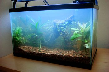 How to fix bacterial bloom in your aquarium for Cloudy fish tank water in established tank