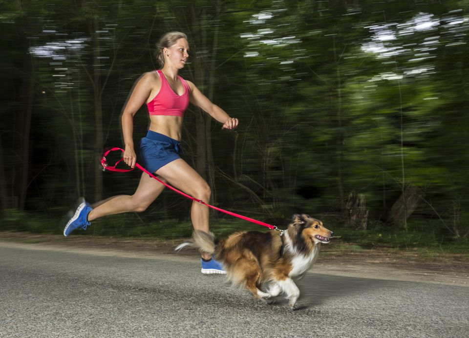 woman running with dog, a sheltie