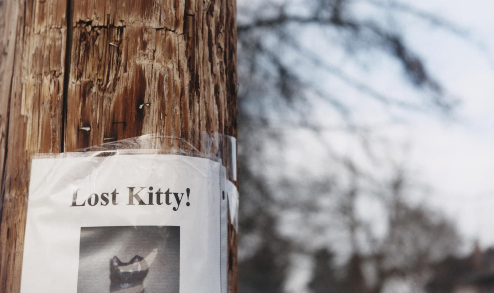 Advice On How To Find A Lost Cat