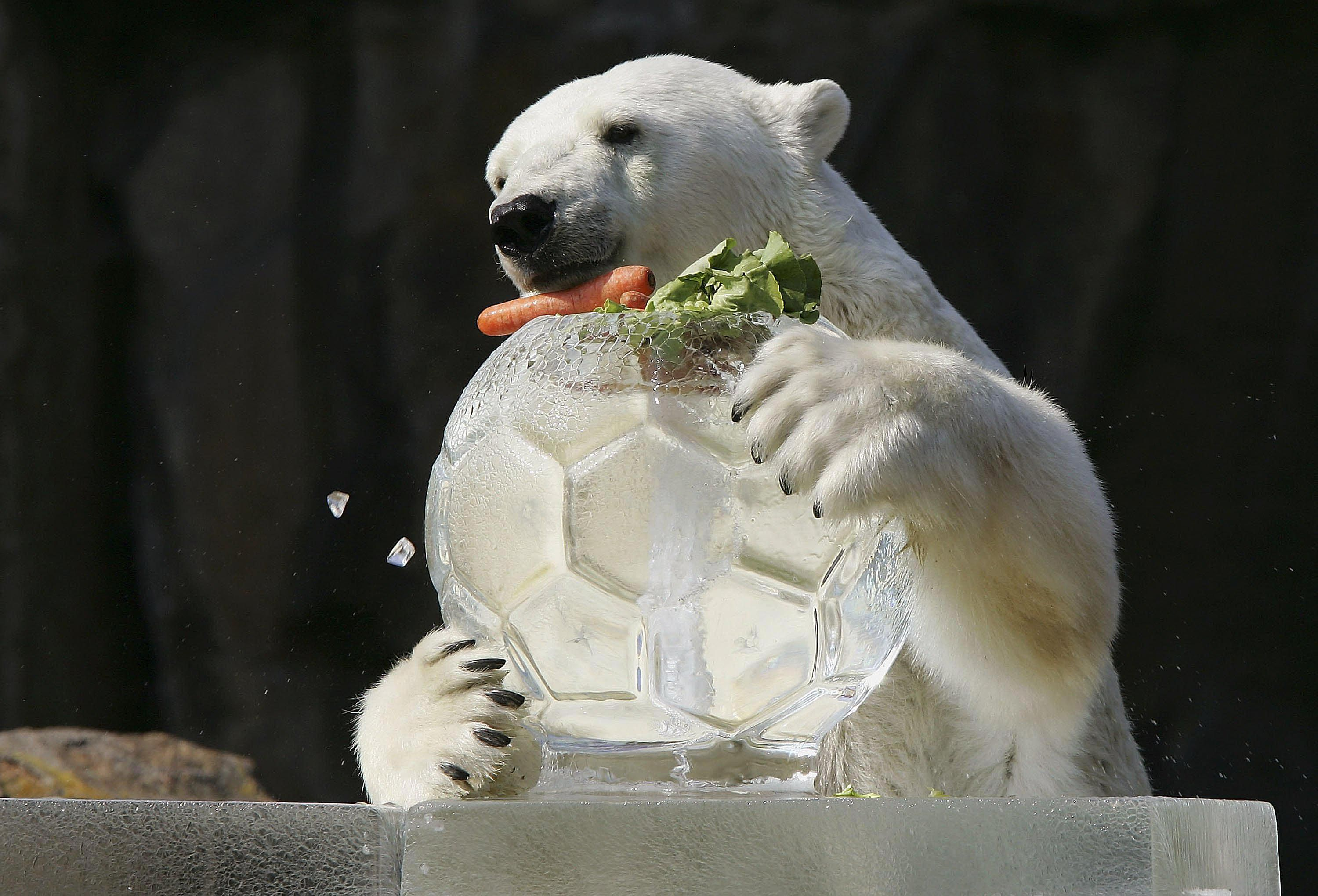 The National Zoo Diet