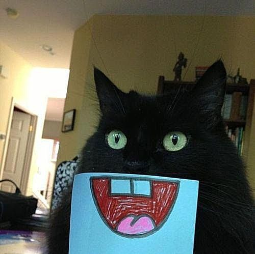 32 Lol Pictures Of Animals Making Funny Faces
