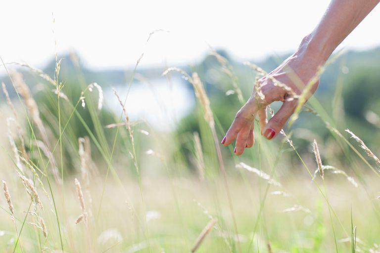 gi-hand-touching-tall-grass.jpg