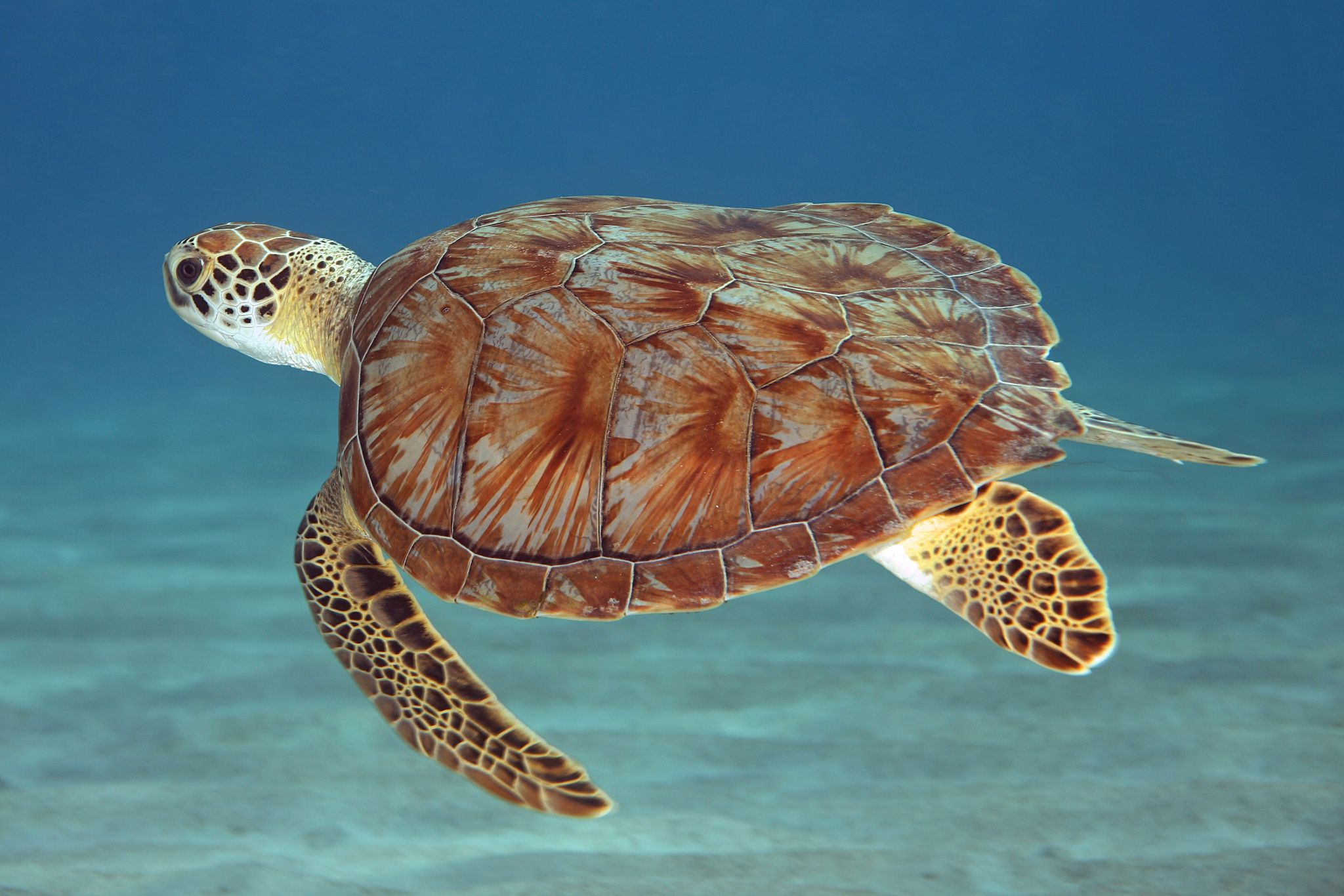 where to see sea turtles in the caribbean