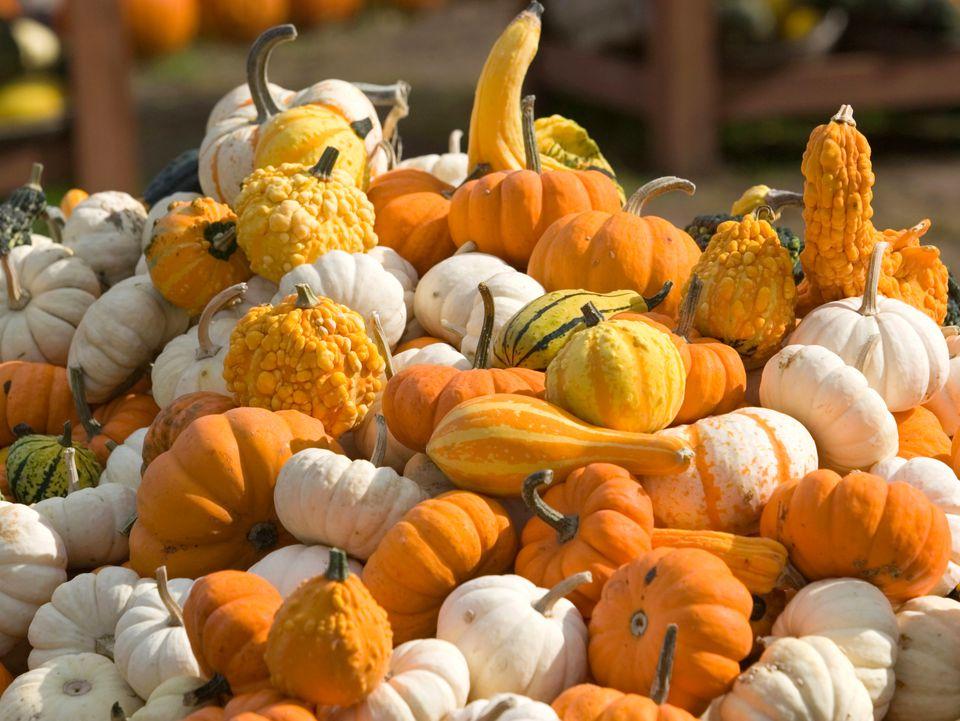 pumpkins, gourds, vegetables, recipes, receipts