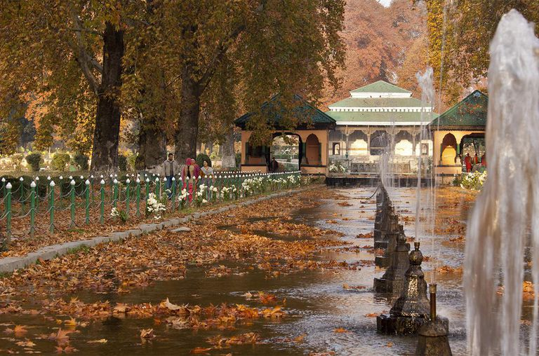A view of Chinar trees in a Mughal garden, as their leaves begin to change colour during autumn on November 13, 2011