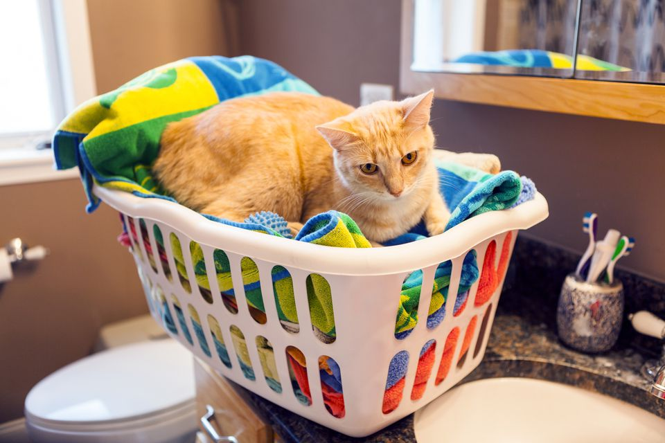 Cat sitting in laundry basket