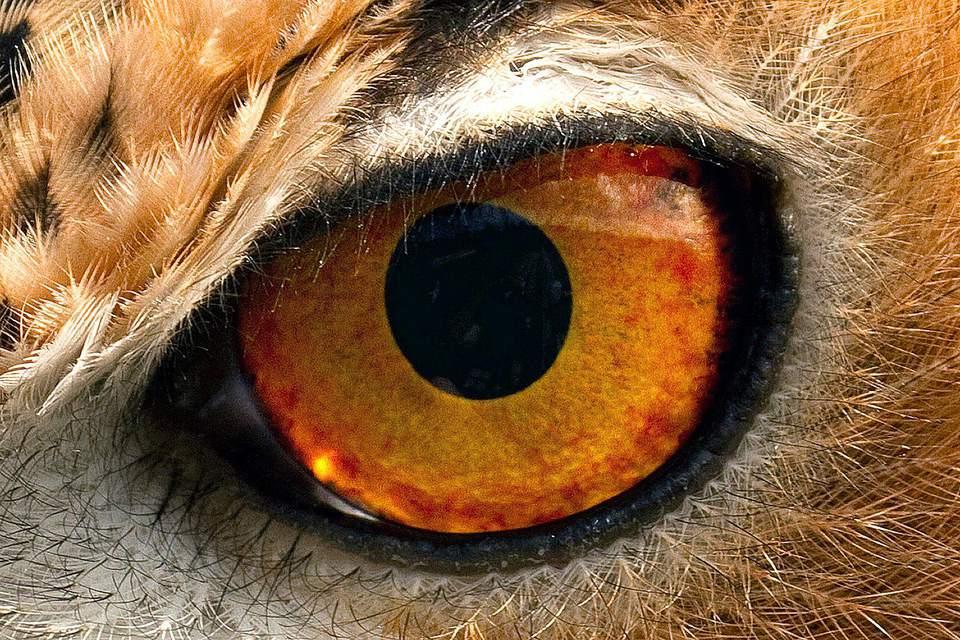 close up photo of a bird's eye