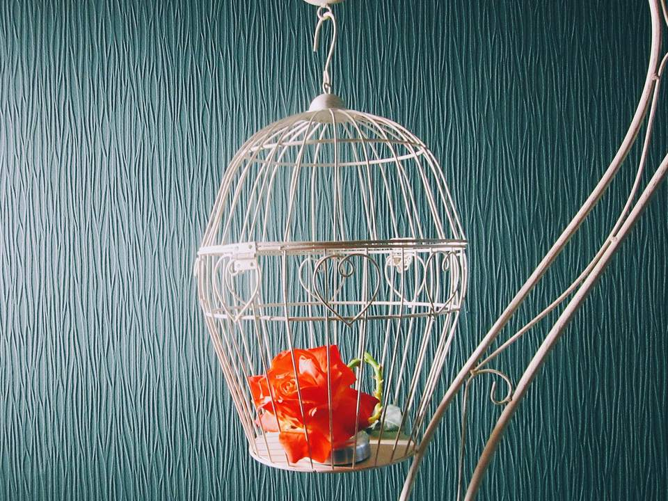 Round Bird Cage