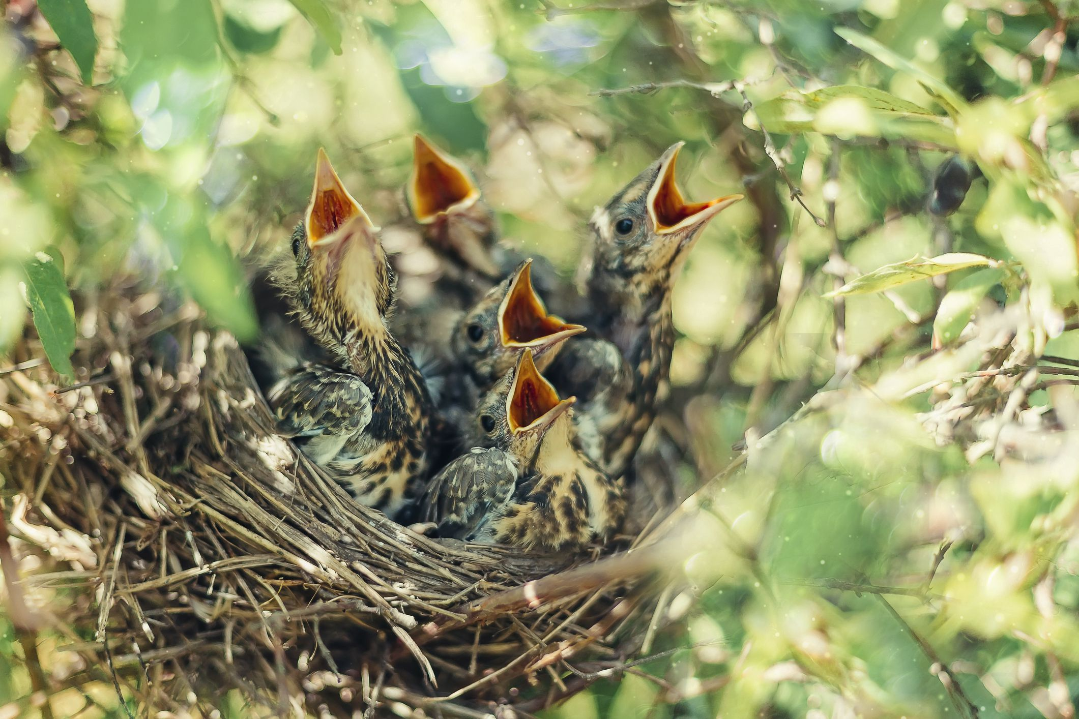 12 things you didn u0027t know about baby birds