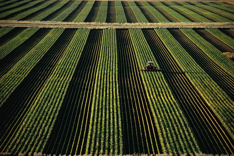 Combine in field with rows of corn and soya bean plants, aerial view
