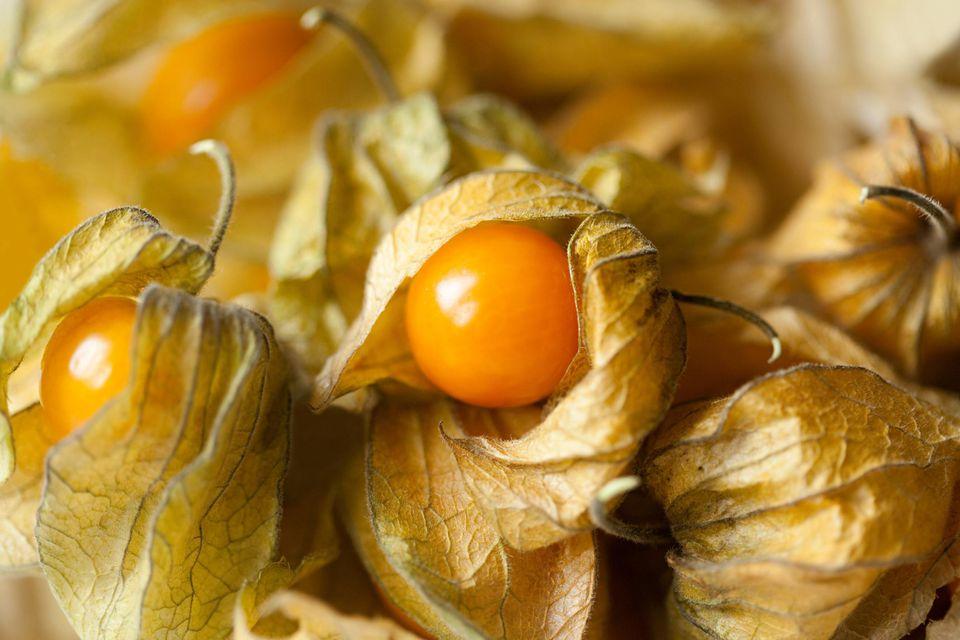 How To Grow Organic Ground Cherries