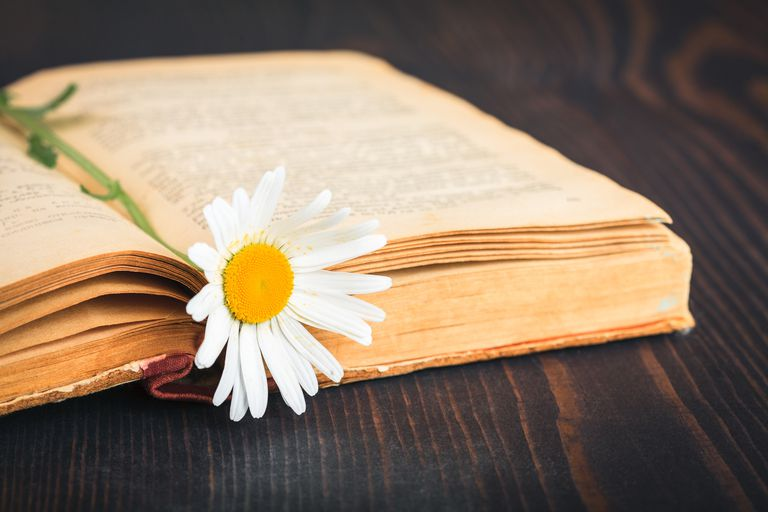 Libro y flor