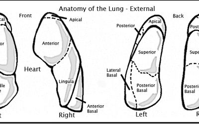 techniques to clear out mucus in the lungs