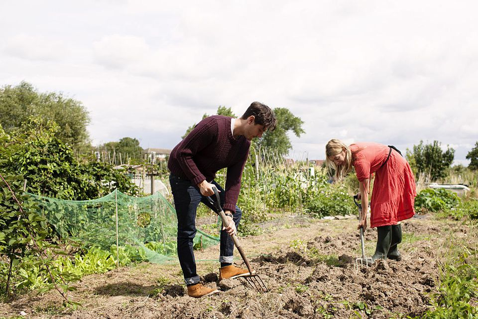 Man and woman farming an allotment.