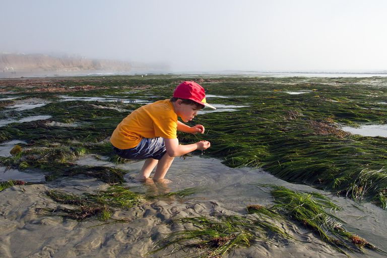 Boy in a Tide Pool at Low Tide