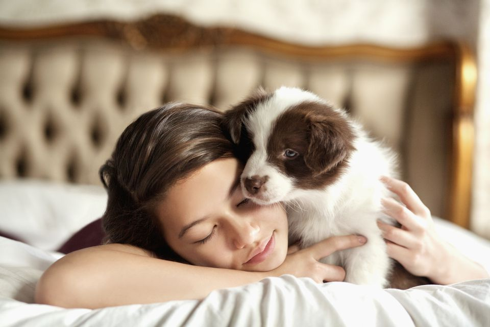 Girl with border collie puppy on bed