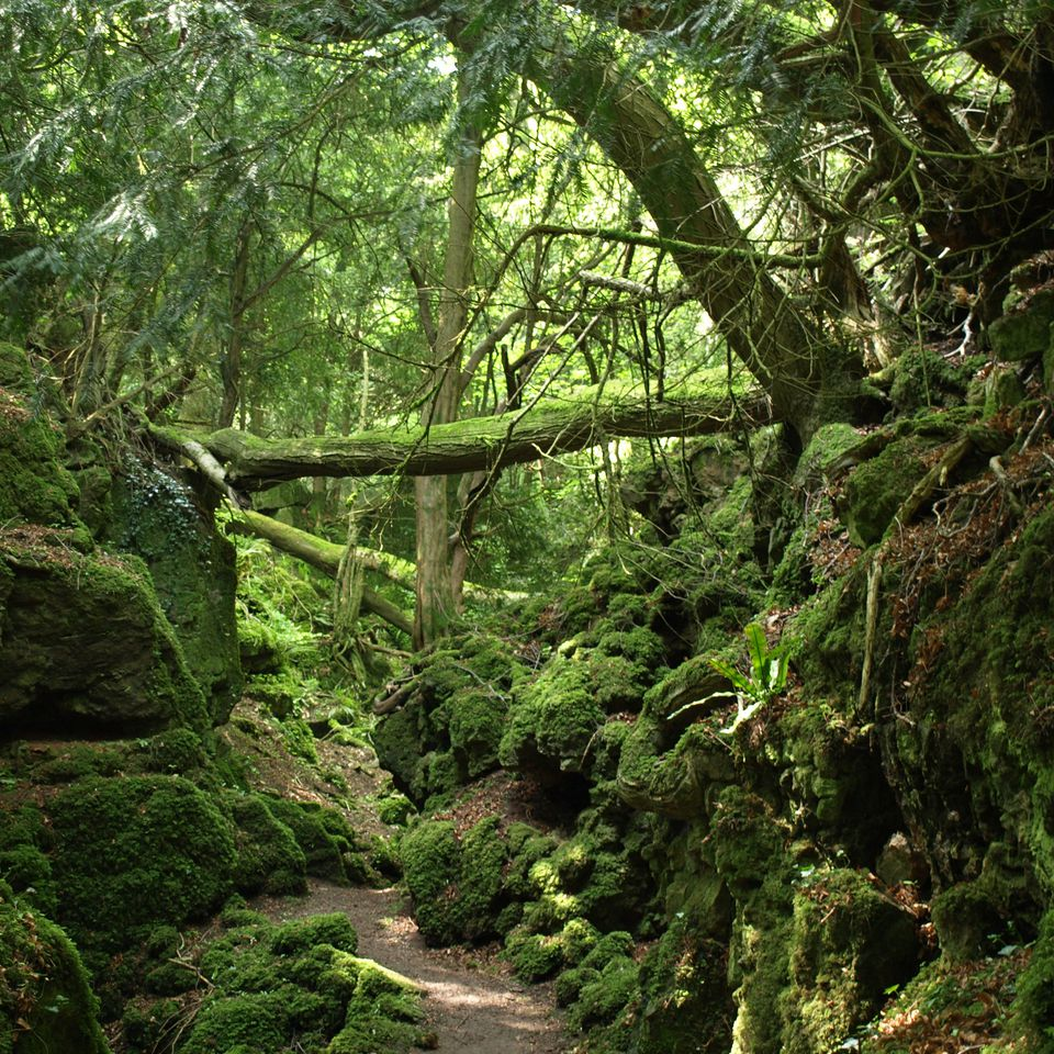 Puzzlewood in Gloucestershire