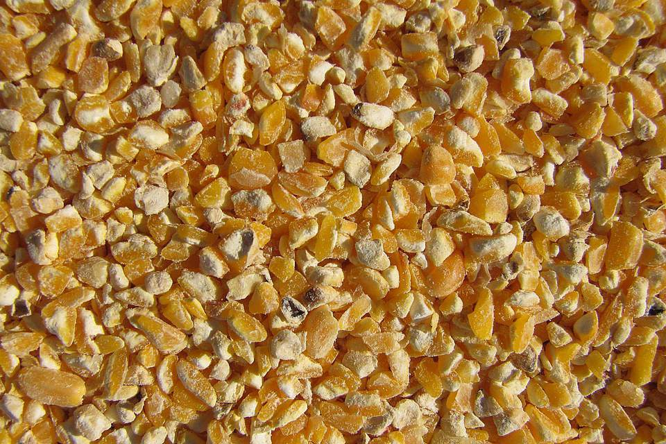 Cracked Corn Birdseed