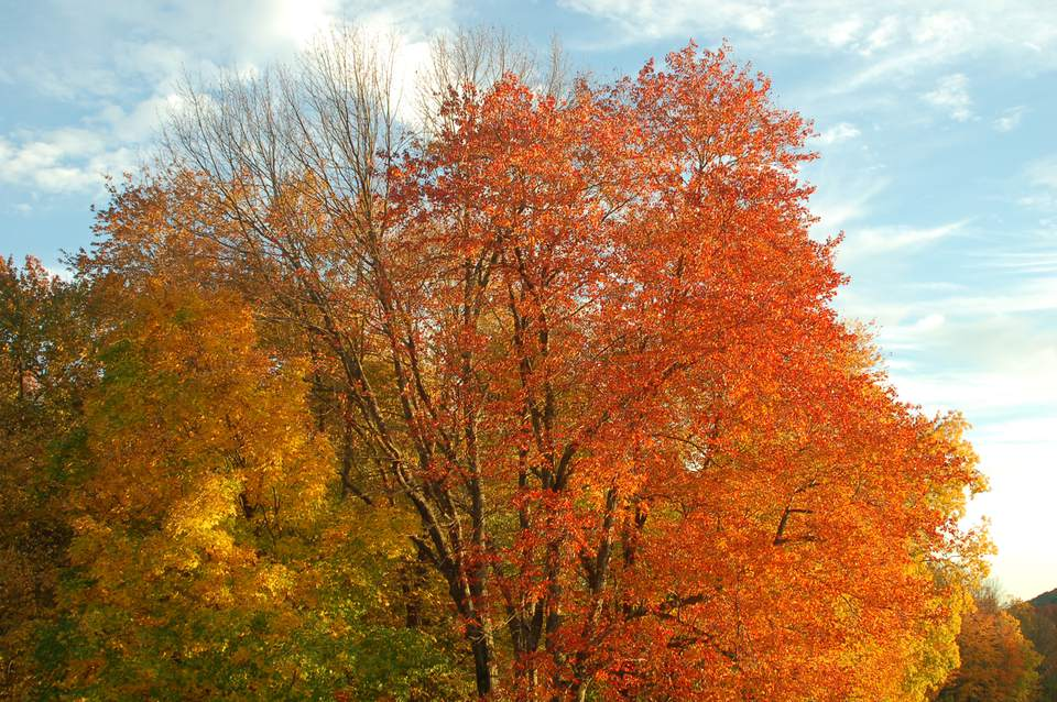 New England Fall Foliage Picture