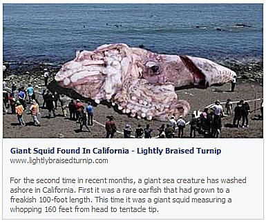 Giant Squid Found in California
