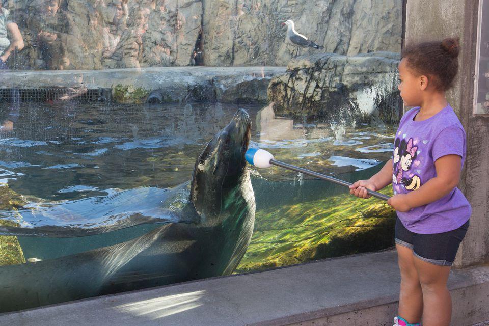 Aquarium Of The Pacific A Guide To The Long Beach Aquarium