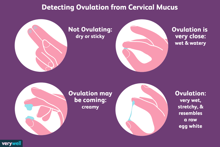 How To Check Your Cervical Mucus And Detect Ovulation-6838