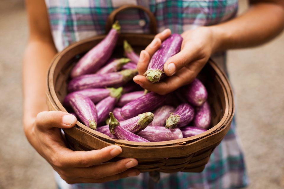 basket of eggplants