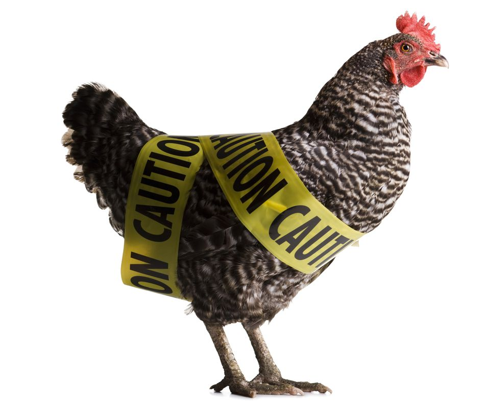 Arsenic and chickens