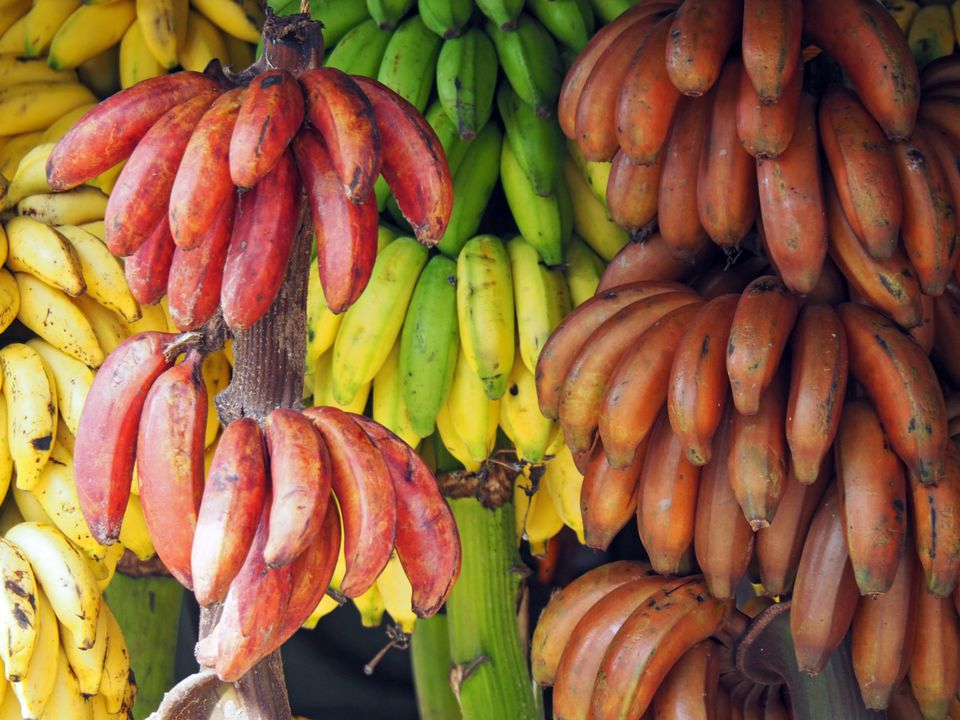 Different Types of Bananas at Market