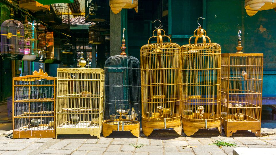 A row of bird in cages