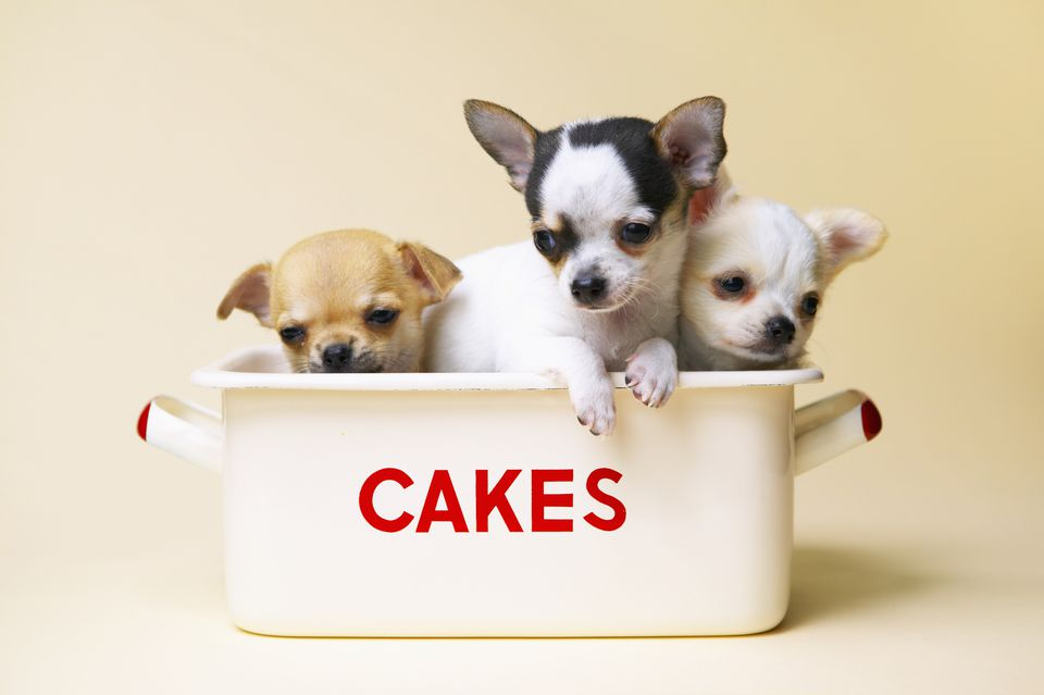 Cake-Calorie-Chi-R-sb10063476c-001.jpg