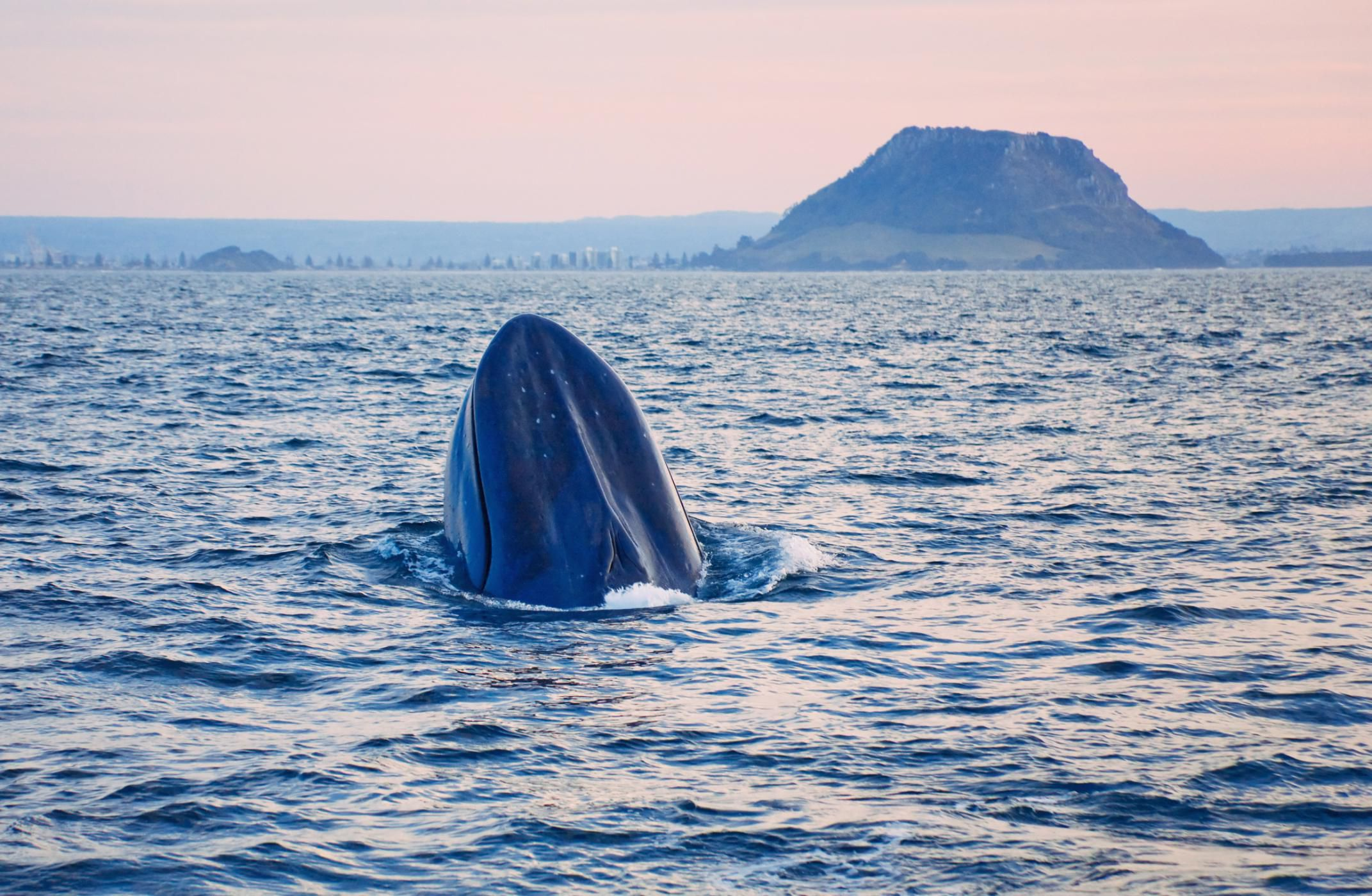 learn about the 14 baleen whale species