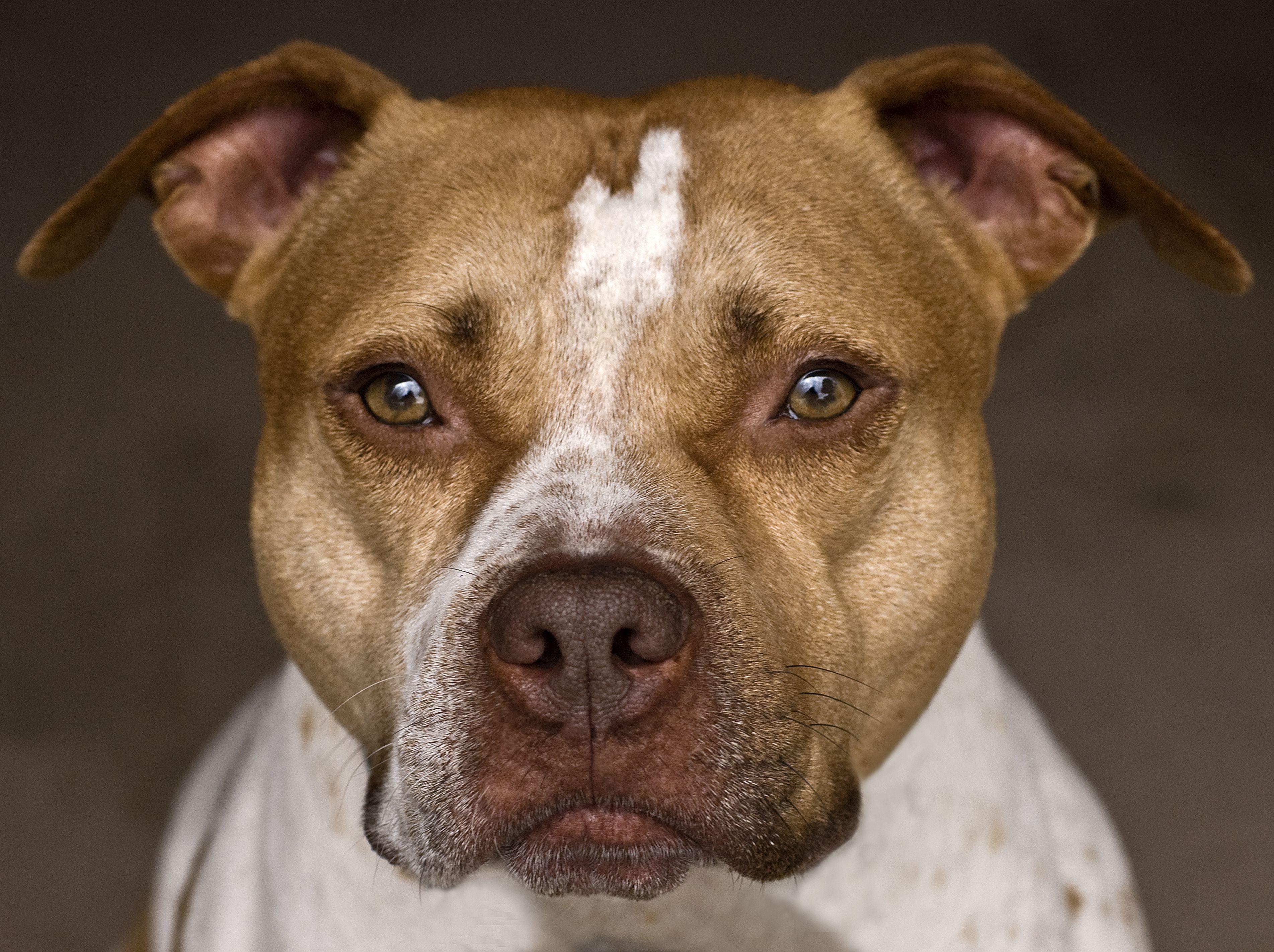 The Basics of Dog Health Care foto
