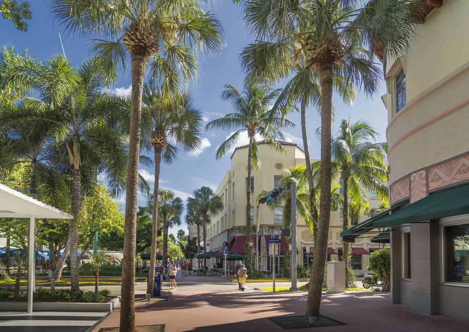 settings Palm trees on urban sidewalk, Miami Beach, Florida, United States