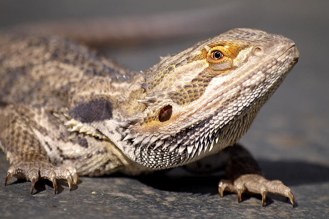 exotic pets pros and cons