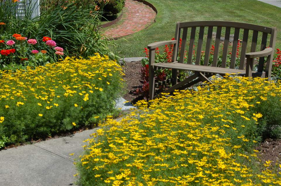 Image of garden bench with coreopsis and zinnias.