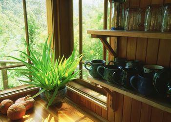 growing houseplants
