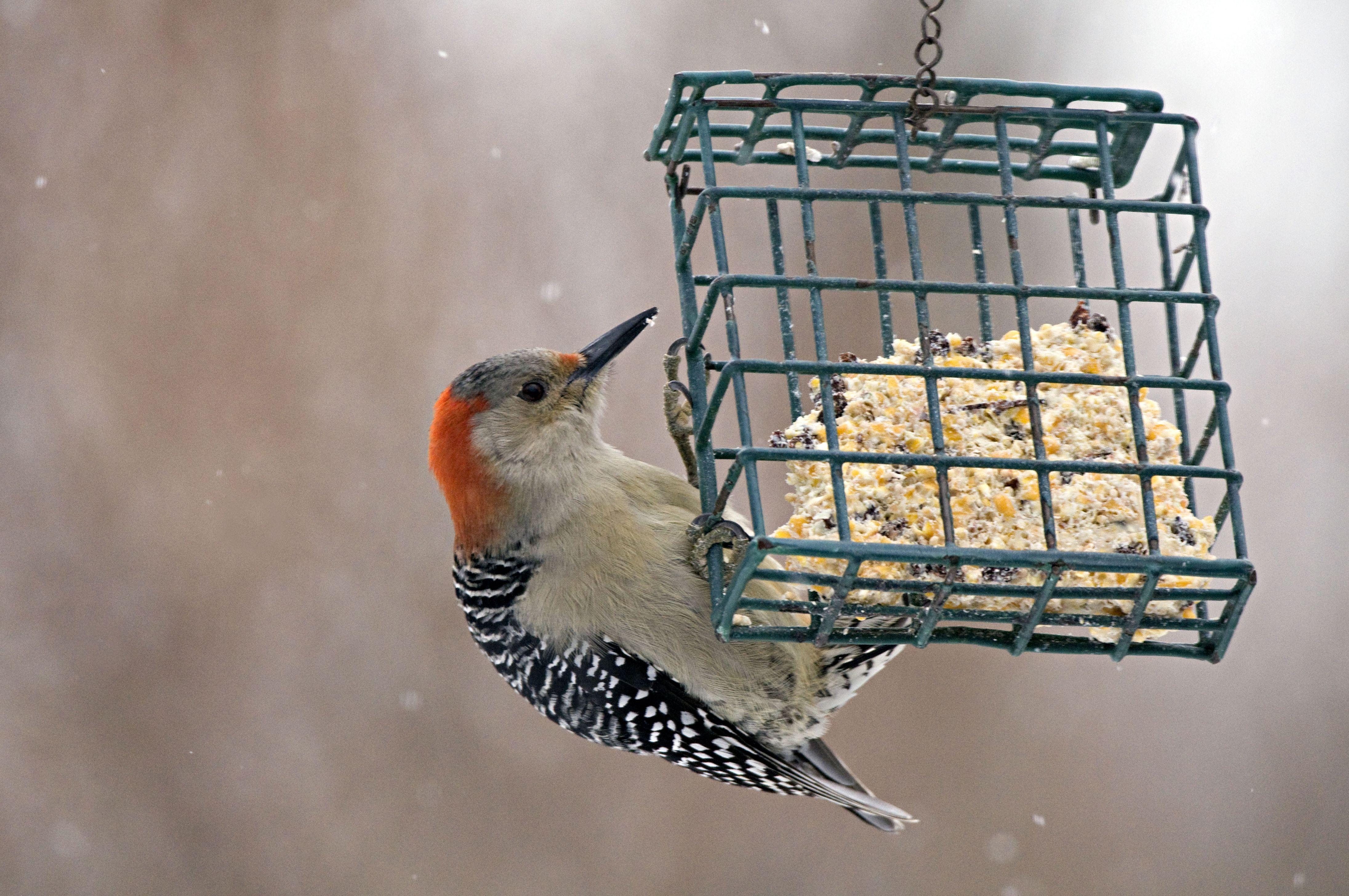 great products rat squirrel feeders image uk bird value proof x feeder open save brilliant pestoff homgar
