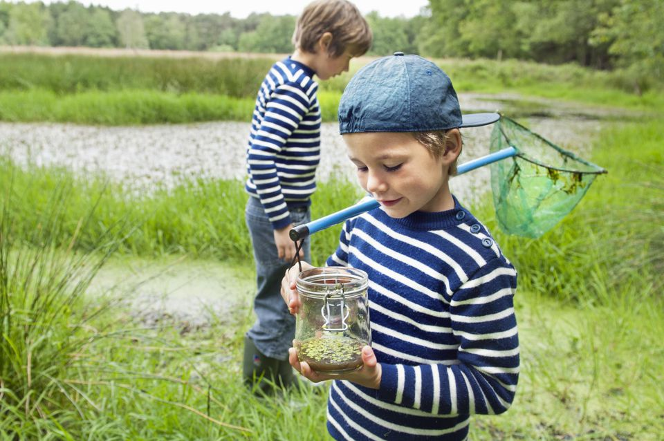 Two boys catching tadpoles