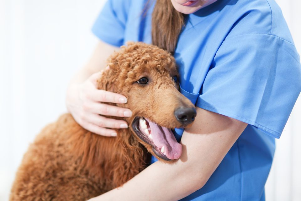 Veterinarian with Dog in Veterinary Medicine Animal Pet Clinic Hospital