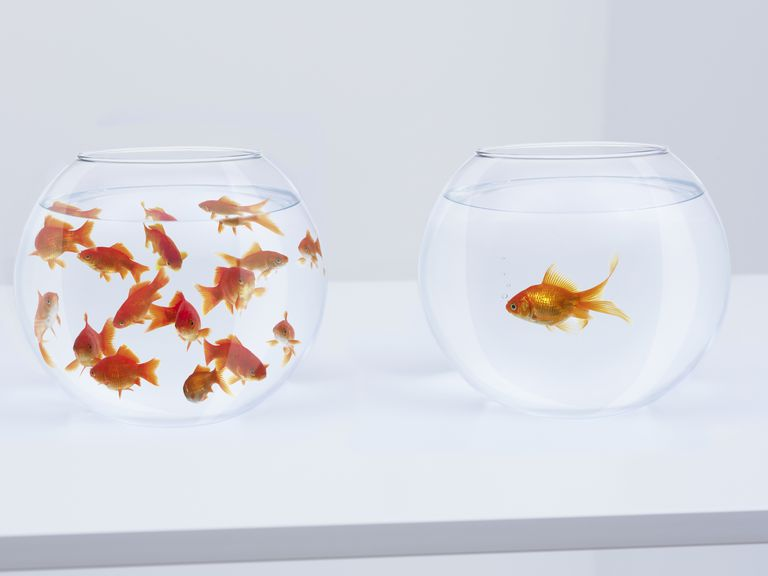 You can use ordinary materials, such as goldfish in a bowl, to learn about how to make observations and use the scientific method.
