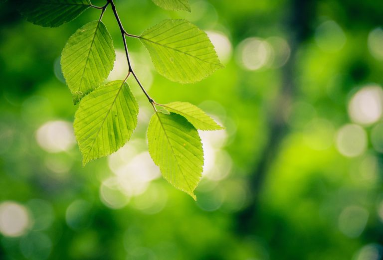 Color psychology of green
